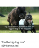 my-pitbull-always-thought-he-was-the-biggest-dog-at-27553976.png